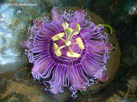purple passion flower in ceramic bowl